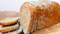 كيفية تكون عفن الخبز
