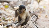 أنواع القرود ومواصفاتها