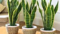 نباتات زينة تتحمل الحرارة