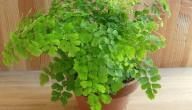 خصائص نبات السرخسيات