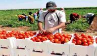 طرق تسويق المنتجات الزراعية