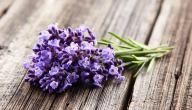 هل يوجد علاج للفطريات بالأعشاب؟ وما رأي العلم؟