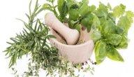 علاج مشاكل الجهاز العصبي بالأعشاب: حقيقة أم خرافة قد تضرك؟