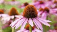 هل يوجد علاج لتورم الغدة الزعترية بالأعشاب: وما رأي العلم؟