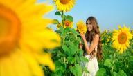 فوائد زيت عباد الشمس للشعر