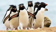 معلومات عن البطريق