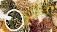 أعشاب تساعد على التئام العظام: ما بين حقائق علمية مثبتة وخرافات