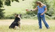 طريقة تدريب كلاب الجيرمن شيبرد