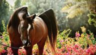 كيفية تربية الخيول