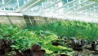 معلومات عن بيوت المحمية الزراعية