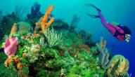 أنواع الشعاب المرجانية