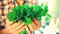 فوائد الكزبرة الخضراء للشعر