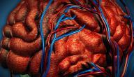 ما هو الاتصال الشرياني الوريدي الدماغي