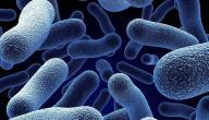 تركيب الخلية البكتيرية