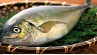 معلومات عن سمك الطرباني
