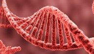 معلومات عن علم الوراثة