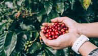 كيفية استخدام قشر القهوة للتنحيف