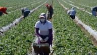 أسباب ازدياد العمالة الوافدة