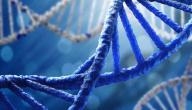 معلومات عن الحمض النووي