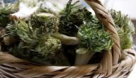 معلومات عن نبات العكوب