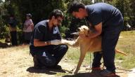 طرق علاج داء الكلب