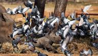 طرق الحفاظ على ظاهرة التنوع الحيوي