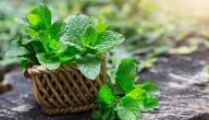 هل يوجد علاج لمرارة الفم بالأعشاب؟ وما رأي العلم؟