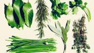 علاج نقص البوتاسيوم بالأعشاب