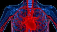 معلومات عن أكبر شريان في جسم الإنسان