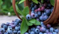 طرق علاج التهاب الإحليل بالأعشاب: حقيقة أم خرافة قد تضرك؟