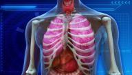 أمراض الجهاز التنفسي الأكثر انتشاراً