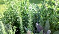 علاج مرض الذهان بالأعشاب: حقيقة أم خرافة قد تضرك؟