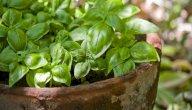 علاج مرض المايلوما بالأعشاب: حقيقة أم خرافة قد تضرك؟