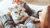 معلومات عن فطريات القطط التي تصيب الإنسان