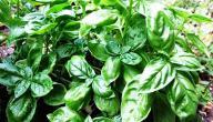 طرق علاج مقاومة الأنسولين بالأعشاب