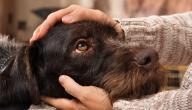 أمراض الكلاب التي تنتقل للإنسان