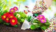 معلومات عن النباتات الزهرية