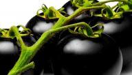 معلومات عن الطماطم السوداء