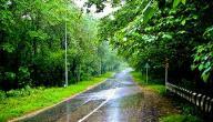 ما هي فوائد ماء المطر