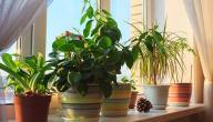 أنواع النباتات المنزلية