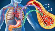 معلومات عن هرمون الأنسولين