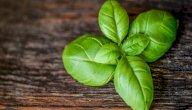 هل من علاج لحصى الكلى بالأعشاب؟ أم هو مجرد خرافة؟