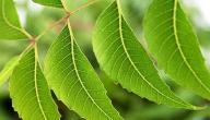 معلومات عن شجرة النيم