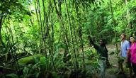 أهمية الغابات المطيرة