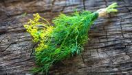 فوائد الشبت الأخضر