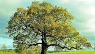 موضوع تعبير عن الأشجار وأهميتها