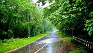 فوائد الأشجار وأهميتها