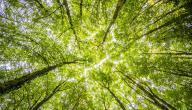 ما هي أنواع الأشجار