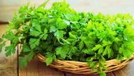 علاج التهاب المثانة بالأعشاب