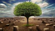 فوائد المطر الحمضي للبيئة